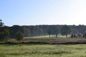 forest in the distance la chatouillette Normandy