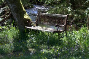 bench by river& wild flowers