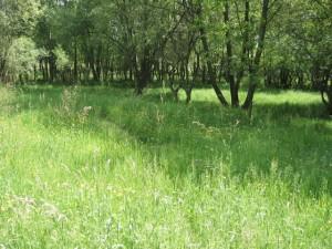 path cur through long grass