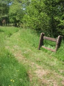 old oak fence post